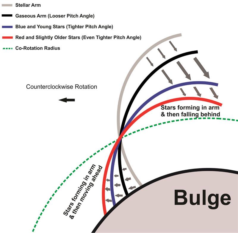 Diagram pokazuje jak rozchodząca się spiralna fala gęstości (szary pas) kompresuje gaz (czarny) doprowadzając do powstania młodych gwiazd (niebieski), które następnie zwijają się do ciasnego ramienia złożonego ze starych gwiazd (czerwony).