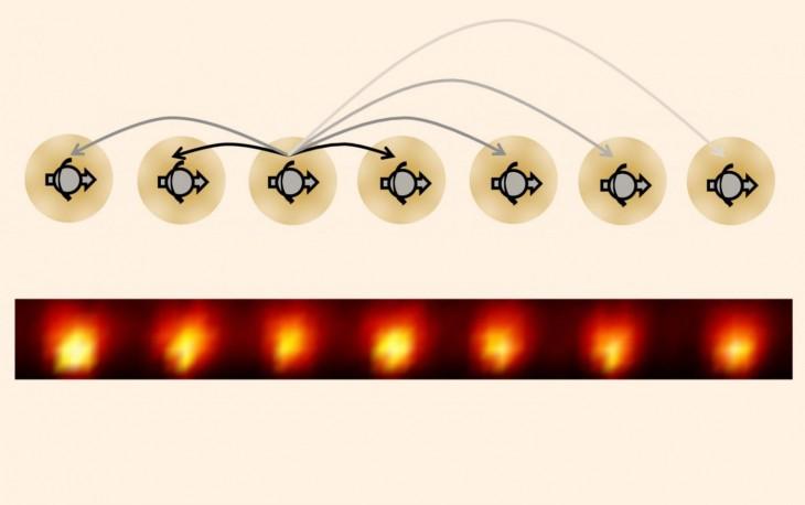 Wykonując instrukcje Normana Yao, fizycy z University of Maryland stworzyli kryształy czasoprzestrzenne używając jednowymiarowego łańcucha jonów iterbu.