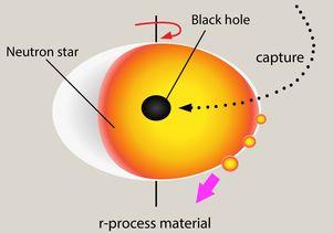Grafika opisująca mechanizm ,ożliwego zjawiska przechwytywania czarnych dziur przezgwiazdy neutronowe.