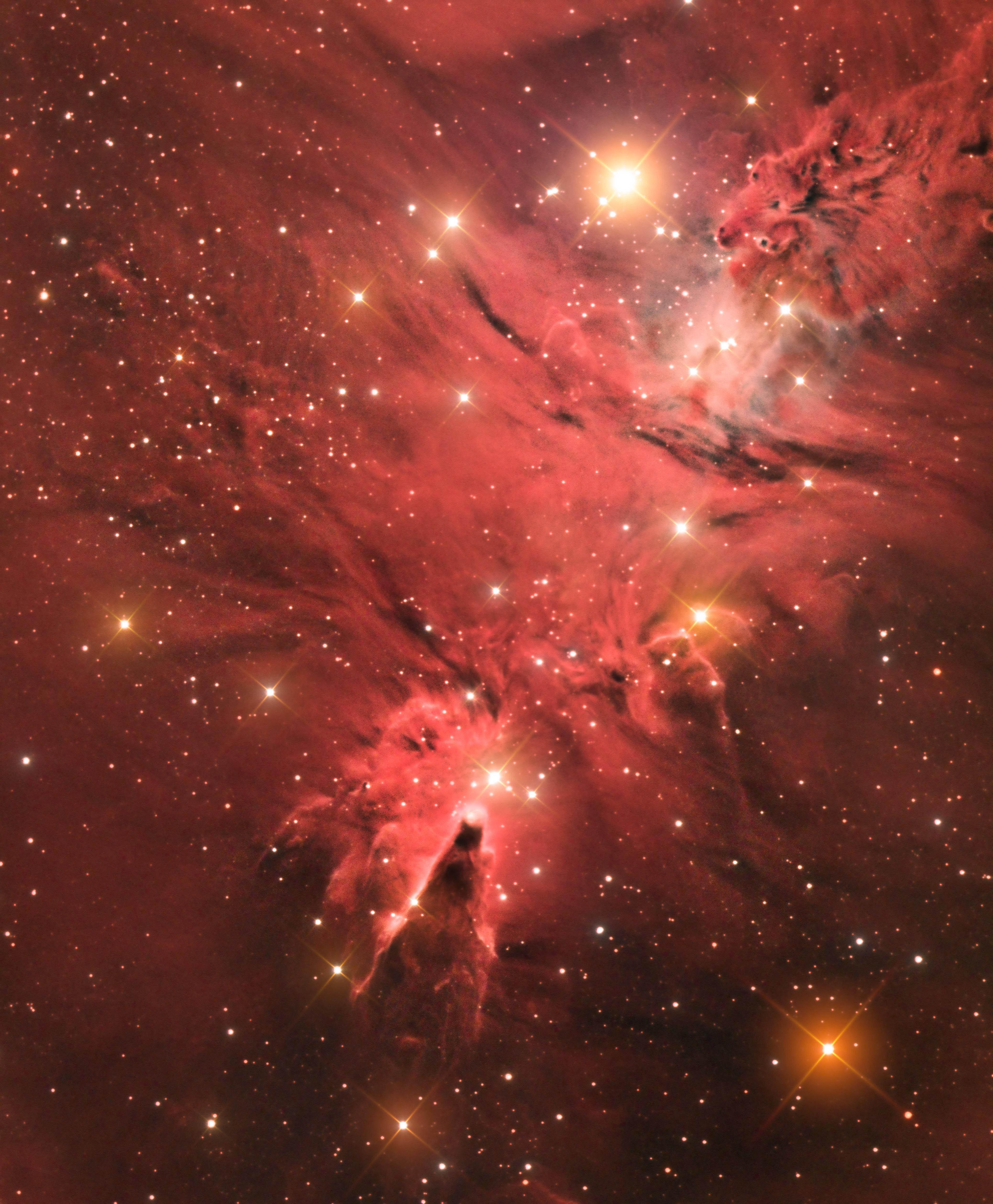 "Mgławica Stożek (NGC 2264) – ""Best newcomer"""