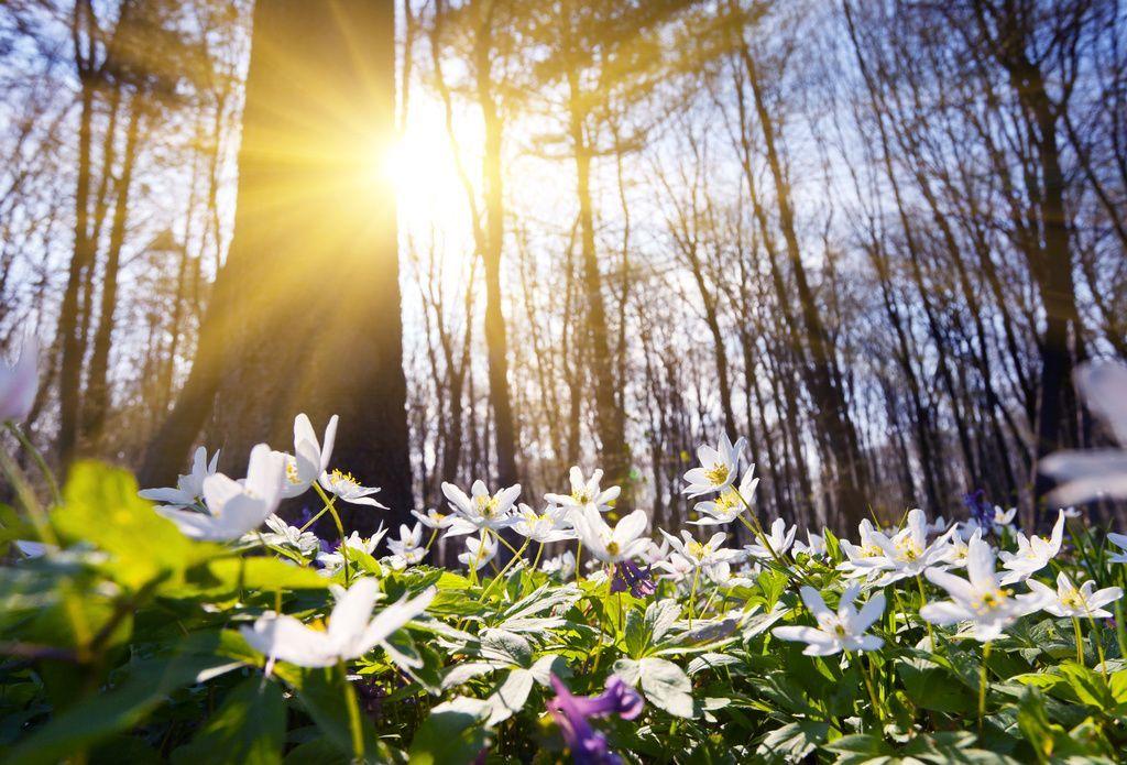 Początek astronomicznej wiosny