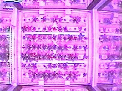 Arabidopsis na ISS