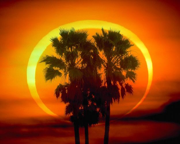Palma i pierścień ognia
