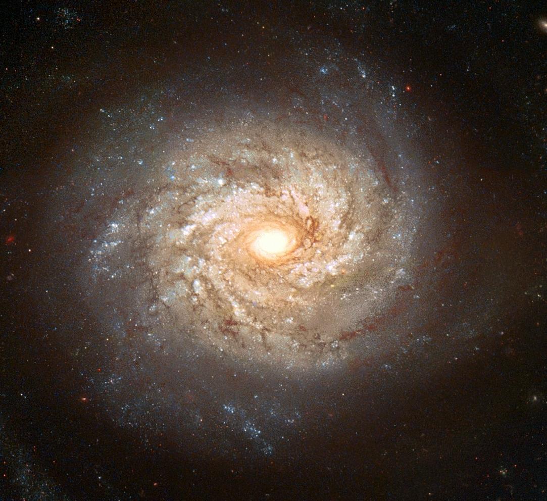Galaktyka NGC 3982