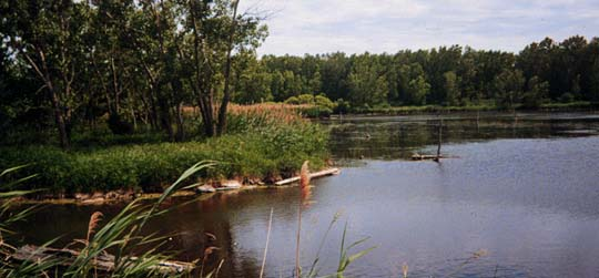 Mokradła Lake Calumet