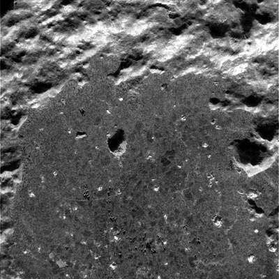 Mikroskopowy obraz dziurki wHumphrey'u