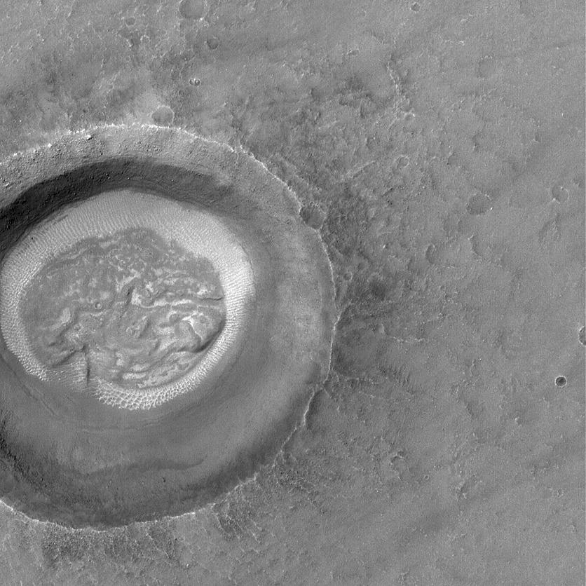 Mózg na Marsie