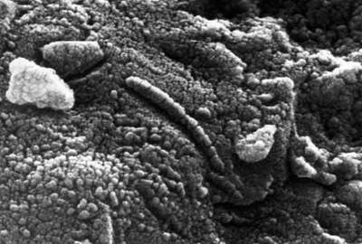 Mikroskopia elektronowa meteorytu ALH84001