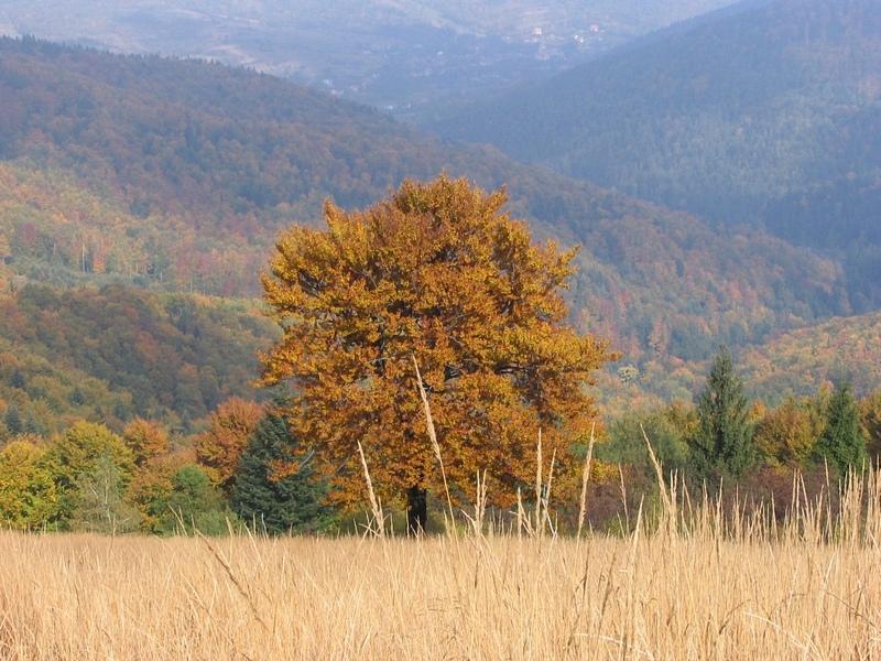 Jesień przyszła...