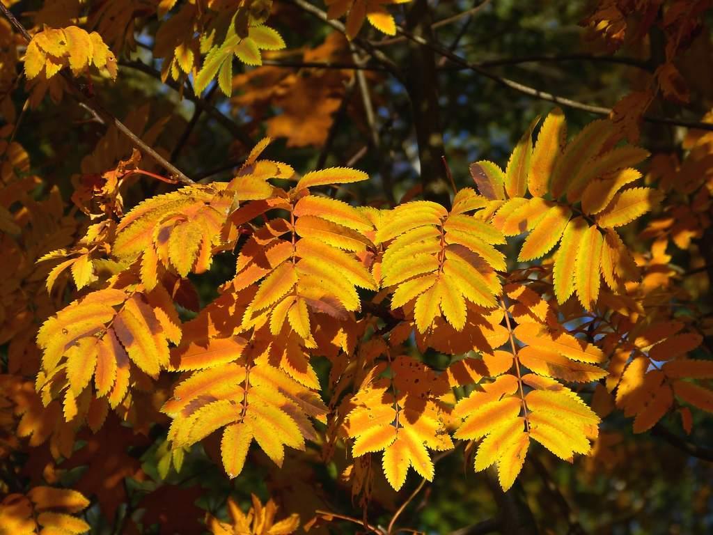Jesienny Widzew (I)