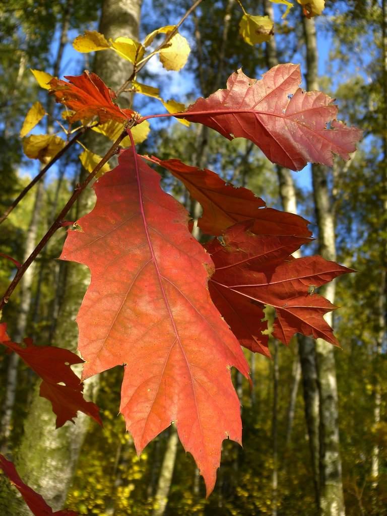 Jesienny Widzew (II)