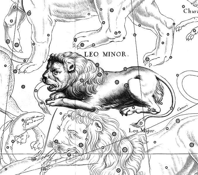 Mały Lew - Leo Minor, ilustracja z atlasu Jana Heweliusza Firmamentum Sobiescianum